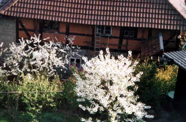 """Die """"Alte Mühle"""" in unmittelbarer Nachbarschaft"""
